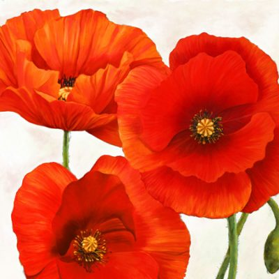 Luca Villa – Poppies I