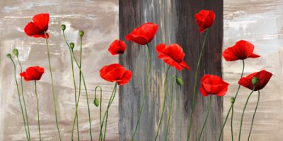Jenny Thomlinson – Country Poppies