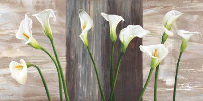 Jenny Thomlinson – Country Callas