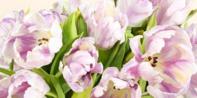 Luca Villa – Tulipes en Fleur