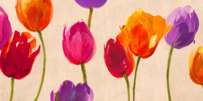 Luca Villa – Tulips & Colors
