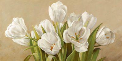 Serena Biffi – Tulipani bianchi