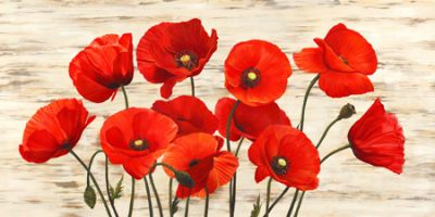 Serena Biffi – French Poppies