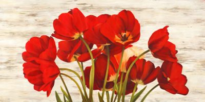 Serena Biffi – French Tulips