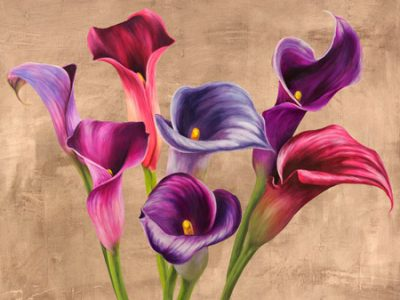 Jenny Thomlinson – Multicolored Callas