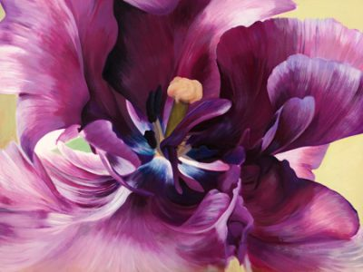 Luca Villa – Purple tulip close-up