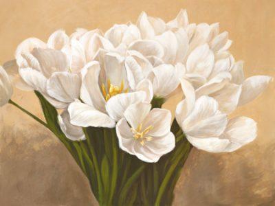Leonardo Sanna – Tulipes blanches