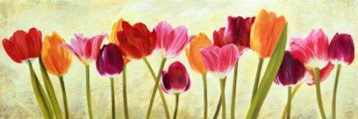 Luca Villa – Tulip parade