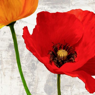 Jenny Thomlinson – Summer Poppies I