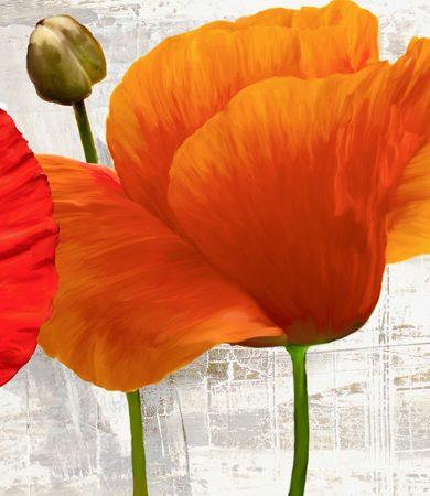 Jenny Thomlinson - Summer Poppies II