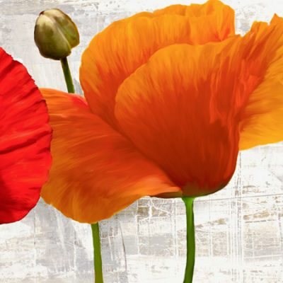 Jenny Thomlinson – Summer Poppies II