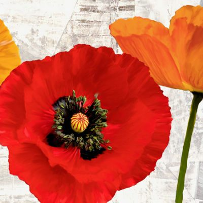 Jenny Thomlinson – Summer Poppies III