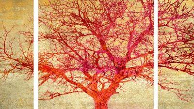Alessio Aprile – Coral Tree – 3
