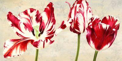 Luca Villa – Tulipes Royales