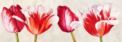 Luca Villa – Gioiosi tulipani