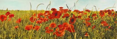 Luca Villa – Poppy Field