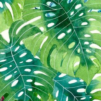 Malpas Gabby – Tropcial Botanica 2