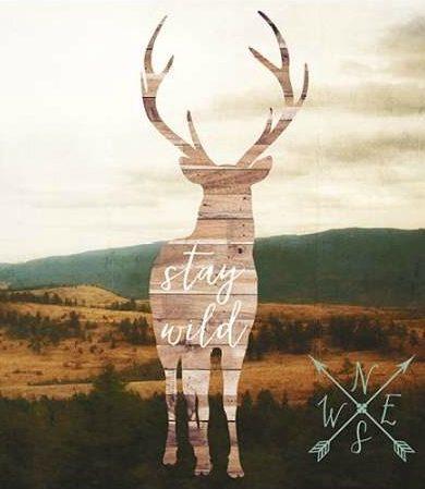 Appleman Sam - Stay Wild