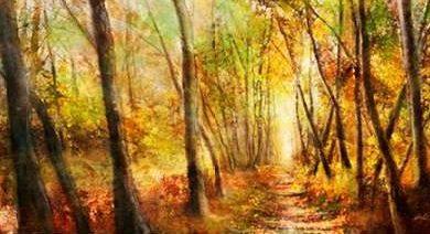 Roko Ken - Forest Pathway