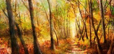Roko Ken – Forest Pathway