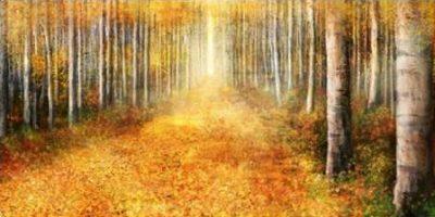 Roko Ken – Yellow Path 1