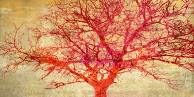 Aprile Alessio – Coral Tree