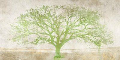 Aprile Alessio – Green Tree