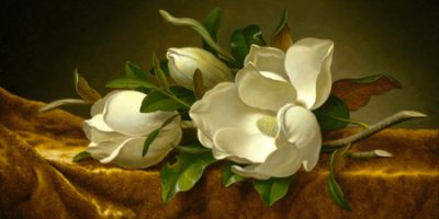 Martin Johnson Heade – Magnolias on Gold Velvet Cloth