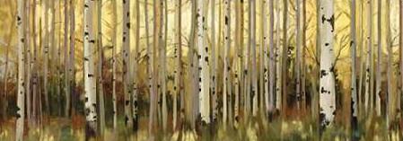 Pearce Allison - Forest Light