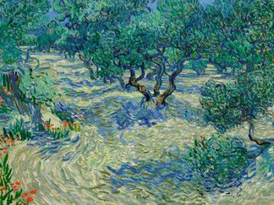 Vincent Van Gogh – Olive Orchard