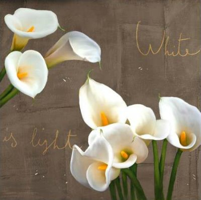 Rizzardi Teo – White Callas