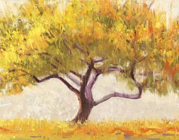 Novak Shirley – Apricot Tree