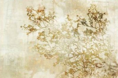 Roko Ken – Dream of Trees I