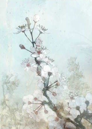 Roko Ken - Climbing Cherry Blossoms I