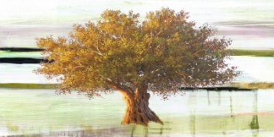 Art Studio – Olive tree I