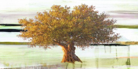 Art Studio - Olive tree I