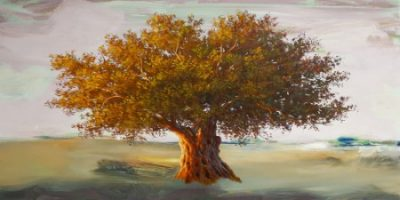 Art Studio – Olive tree II