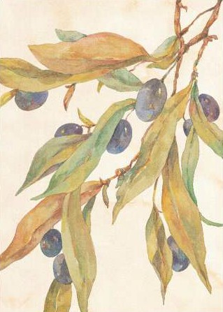 Unknown – Hanging Olives