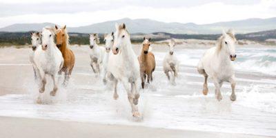 Zero Creative Studio - Horses on the beach